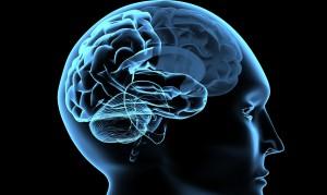 brain image for sleep article